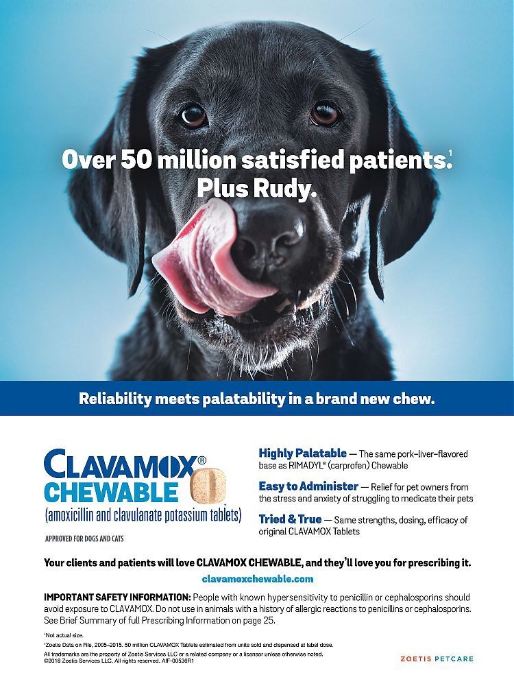Clavamox---Today___s_Veterinary_Business_-_June__July_2018---vetUSA---English---Print_Ad---pSP---Animal_Health_Category.jpg